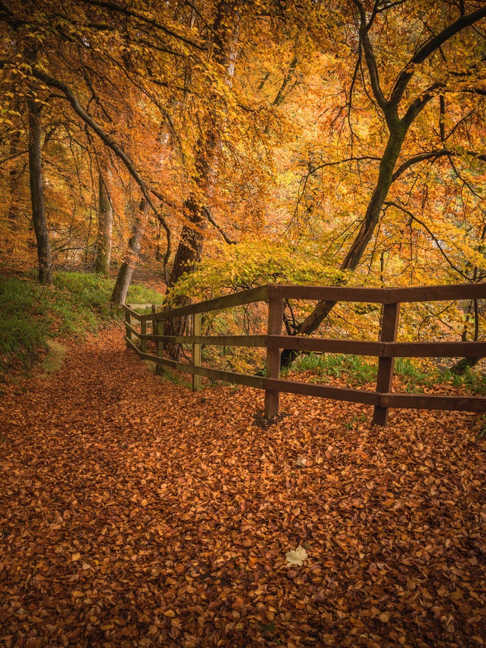 Dylan Nardini Autumn Woodlands Corra Castle Falls Of Clyde