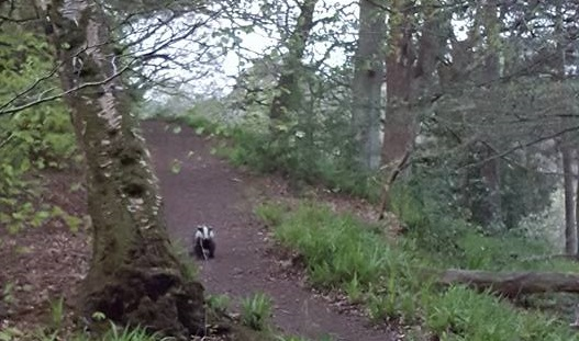 WINNER: Jillian Slater – Badger at Cleghorn Glen