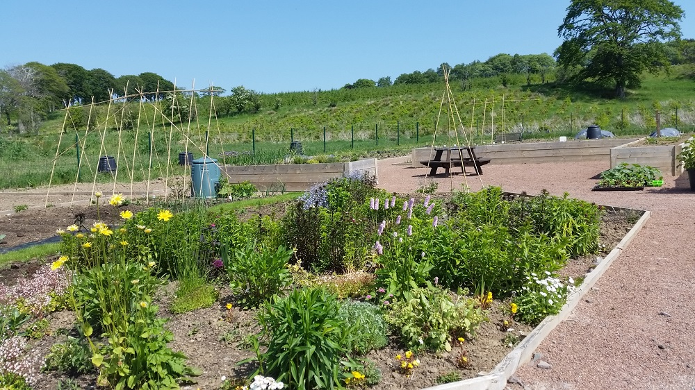 The beautiful and tranquil Lesmahagow allotments