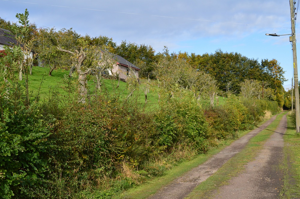 The lane at Hazelbank Braes cuts between privately owned orchards