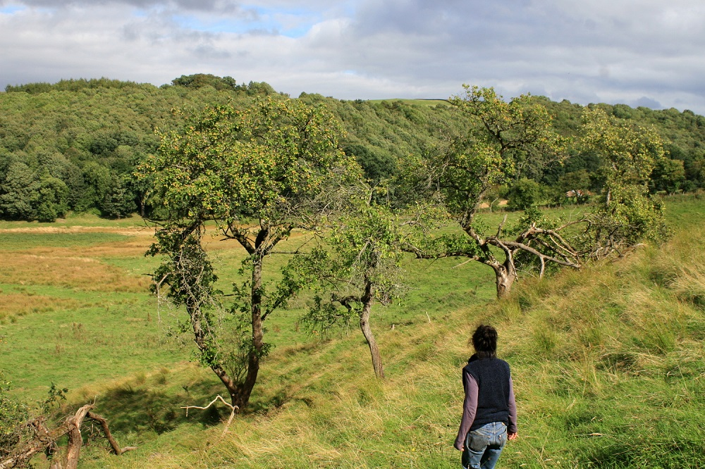 Volunteers help to survey orchards in South Lanarkshire