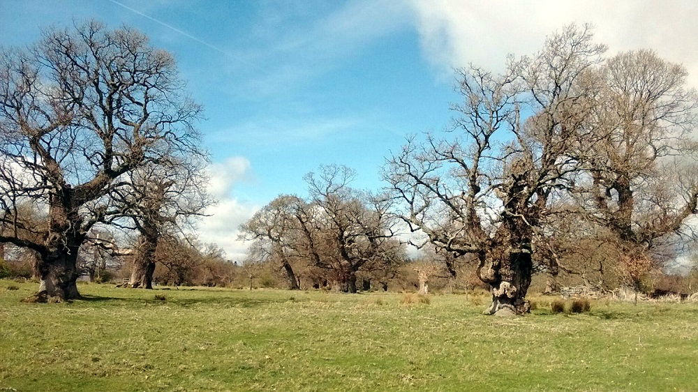 Attendees on the guided walk will visit parts of the Cadzow Oaks usually inaccessible to the general public