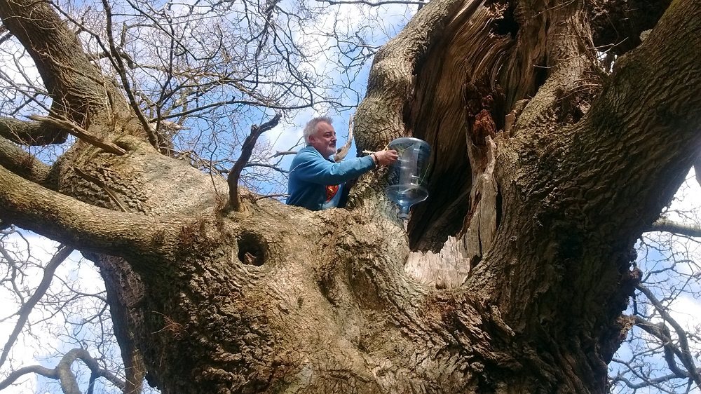 Volunteer Chris checks one of the traps in the Cadzow Oaks
