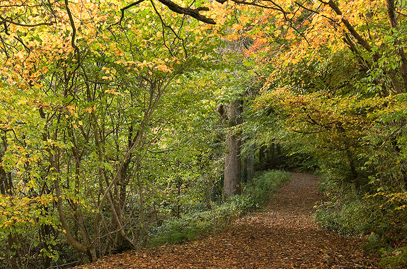 The native woodlands cloaked in wonderful autumn colour