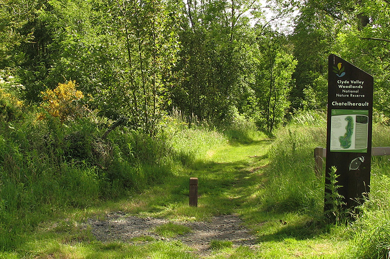 Try out some of the more secluded walks at Chatelherault Country Park