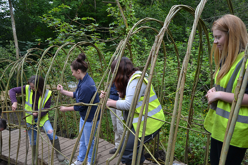 Volunteers help create the willow tunnel at Clearburn