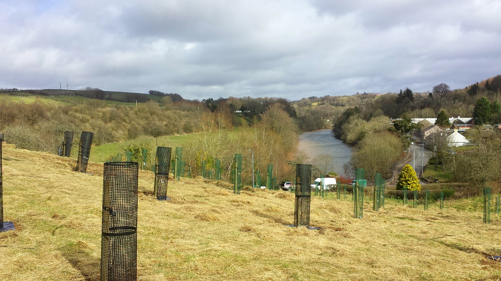 Over 750 new plum, pear, apple and damson trees have been planted locally since the beginning of Clyde and Avon Valley Landscape Partnership supported projects in 2012, with a target of 1000 reached by 2018.