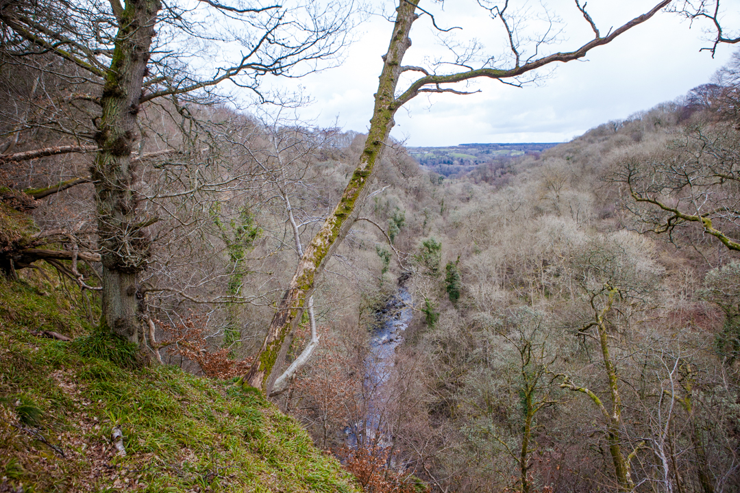 View over Lower Nethan Gorge and the River Mouse, tributary to the River Clyde