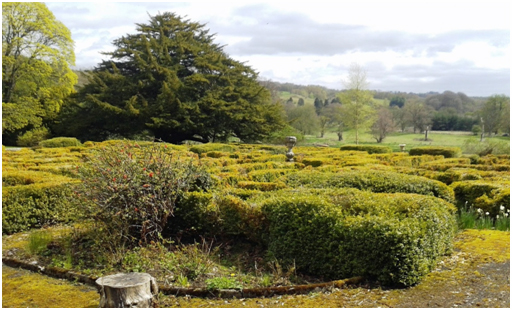 The remaining Pleasure Gardens with ornamental box hedges and yew tree, with Mauldslie parkland to the rear