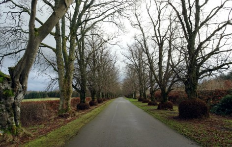 Part of the avenue of lime trees that runs from the Lodge House towards the Kerse
