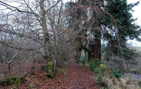 The entrance to the walk along the river Nethan, still lined with specimen trees and part of the modern day network of paths around the Kerse