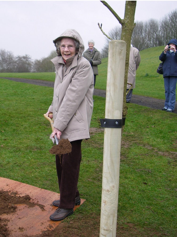 Audrey Wallace investigates the 50th Silver Anniversary tree at Chatelherault for the Hamilton Natural History Society, HNHS, in 2012