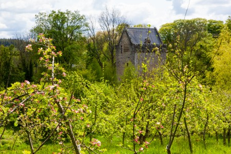 The orchard at historic Halbar Tower
