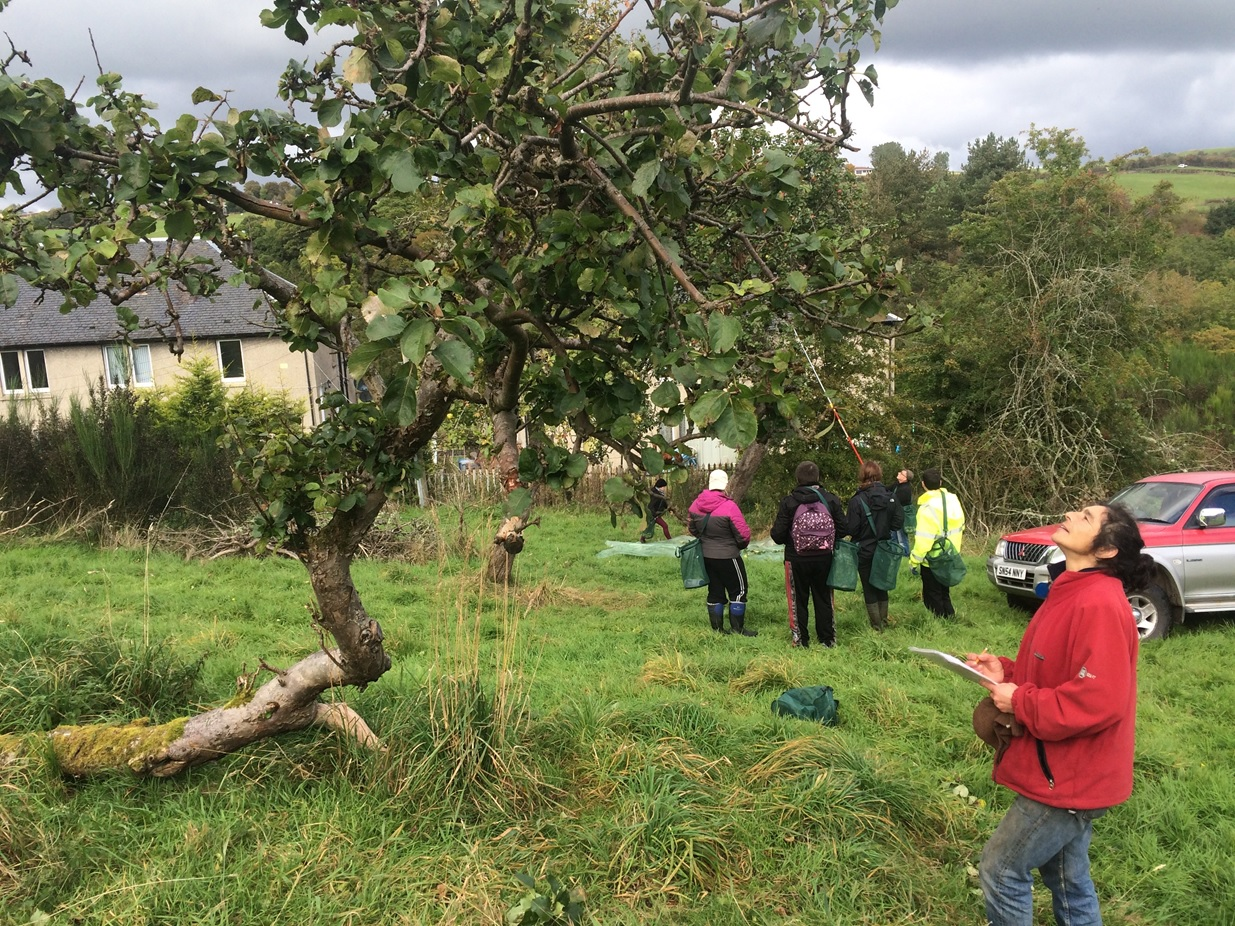 Volunteers survey an orchard site