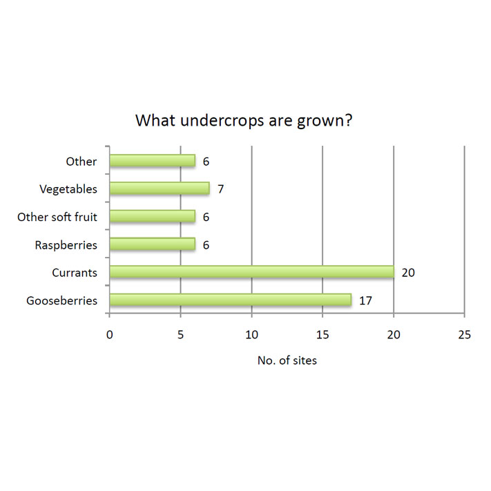 What undercrops are grown?