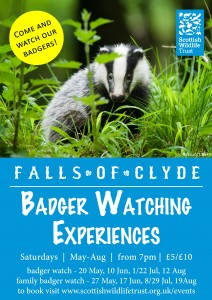 #CAVWChallenge: Family Badger Watch
