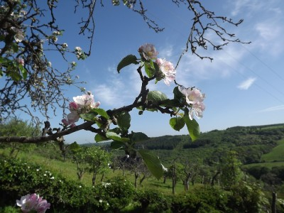 Clyde and Avon Valley Festival 2017:  Blossom Day