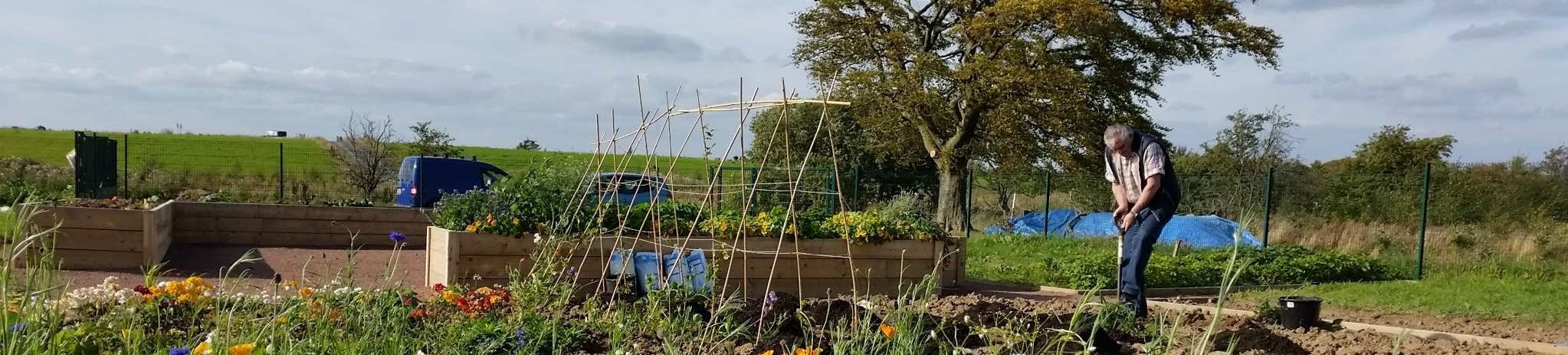 Lesmahagow allotments - the first few months