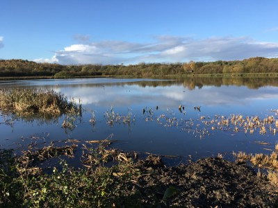 CANCELLED - RSPB Baron's Haugh Nature Reserve Guided Walk