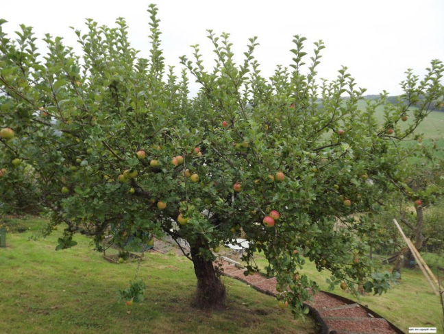 Volunteers Sought to Survey North Lanarkshire Orchards