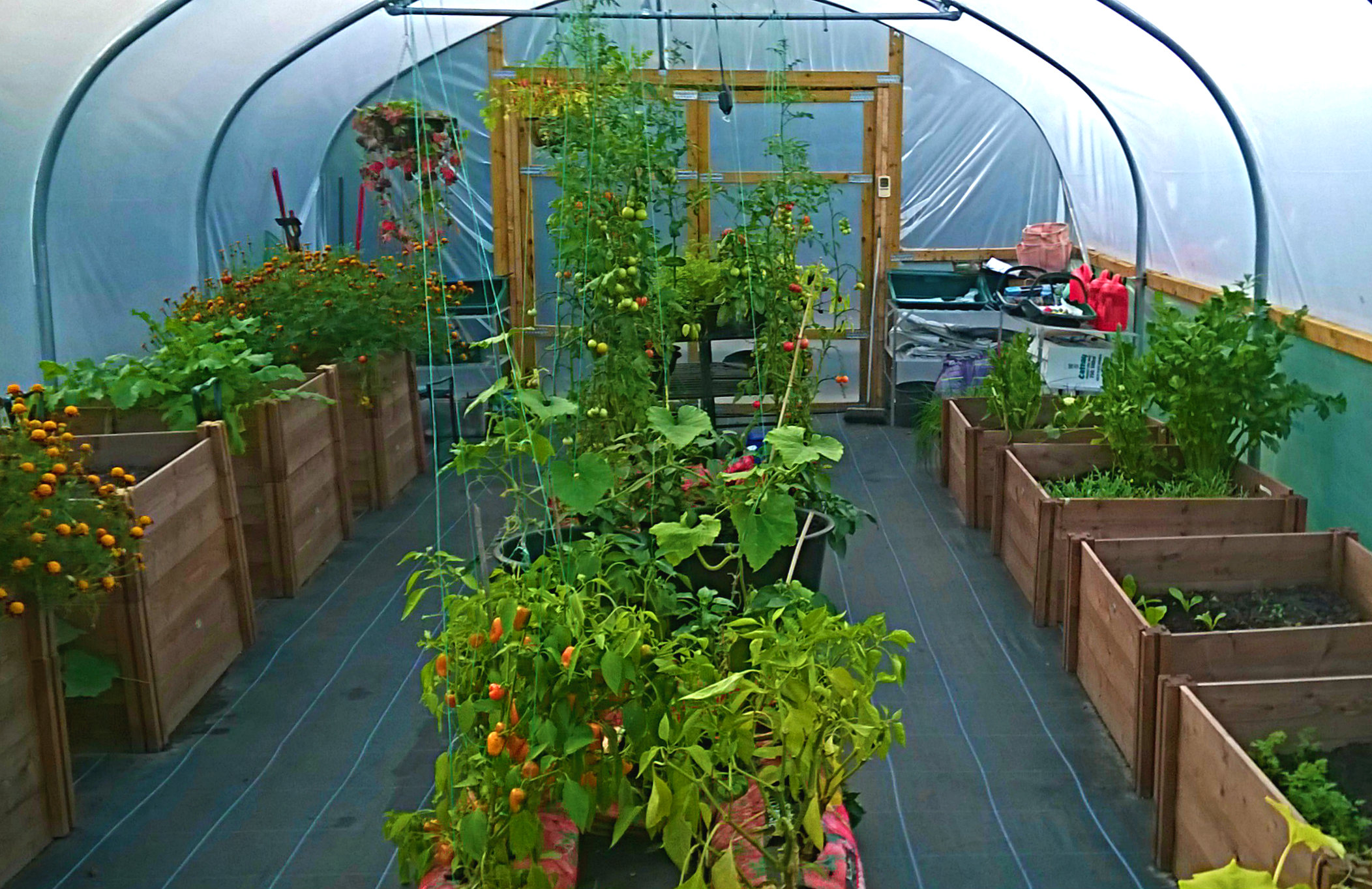 Dalserf Polytunnel Offers More Exotic Produce than Local Supermarket!