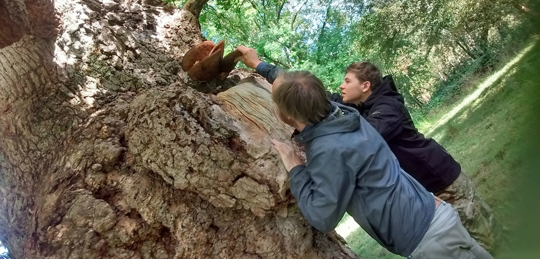 Deadwood supports 'Life in the Cadzow Oaks', Chatelherault Country Park