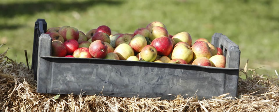 Celebrate the Clyde Valley at Fruit Day