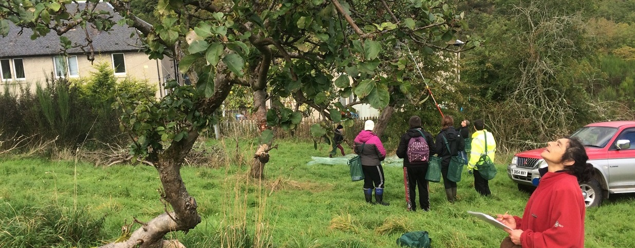 Orchard revival mapped in the historic Fruit Basket of Scotland